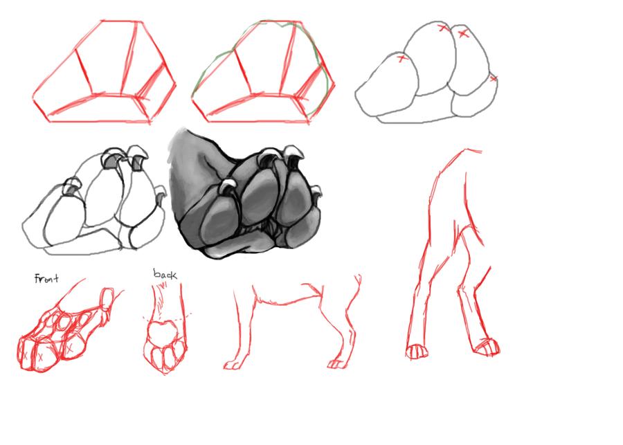 Real dog paws anatomy - dinocro.info